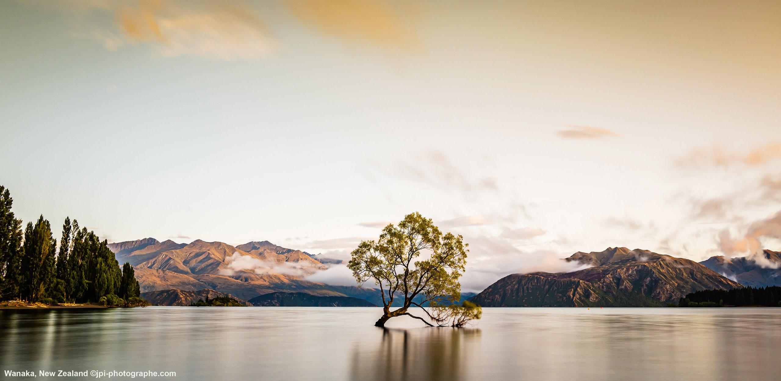Wanaka Tree,New Zealand jpi photographe Mulhouse